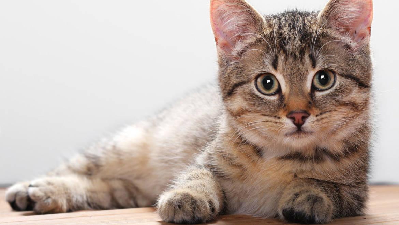 Где подстричь кота и кошку