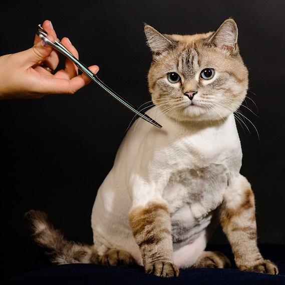Стрижка кошек в Москве недорого